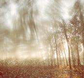光爆炸被弄脏的抽象照片在树和闪烁bokeh中的点燃 被过滤的图象和构造 免版税库存图片