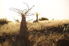 光的二个瓶结构树 图库摄影
