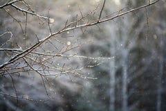 光秃的冬天分支 免版税库存图片