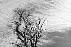 光秃的分支和层云 库存照片