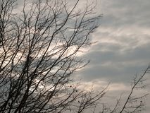 光秃的分支在秋天阴云密布天空背景中 免版税图库摄影