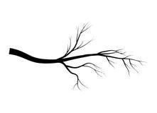 光秃的分支树剪影传染媒介标志象设计 在白色背景隔绝的美好的例证 免版税库存照片