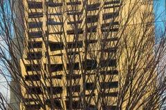 光秃的大厦的树和反射 免版税库存照片