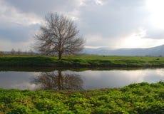 光秃的孤立树 免版税库存图片