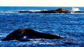 光秃的岩石在风雨如磐的海,岩石鸟的 库存图片