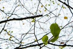 从光秃的枝杈的网在秋天 库存图片