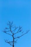 光秃的树上面在清楚的蓝天的 免版税库存照片
