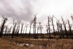 光秃的树剪影反对风雨如磐的天空的 图库摄影