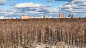 光秃的树和为时熔化的雪全景  库存照片