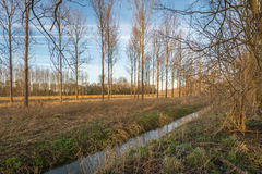 光秃的树和分支在一个五颜六色的风景 库存图片