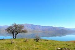 光秃的树和湖 免版税库存照片