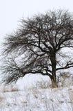 光秃的树特写镜头在冬天 库存图片