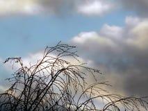 光秃的树的上面反对多云天空的在晚上 库存图片