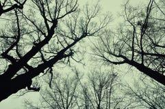 光秃的树秋天有雾的11月自然本底woth上面  免版税图库摄影