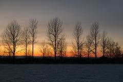 光秃的树行反对冬天日落天空的 免版税库存图片