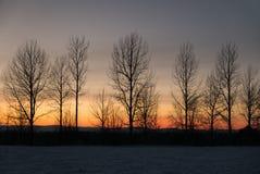 光秃的树行反对冬天日落天空的 免版税库存照片