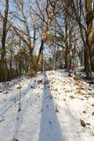 光秃的树,生长在小山在冬天森林里 库存图片
