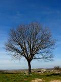 光秃的树 库存图片