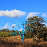 光秃的蓝色树在公园 库存照片