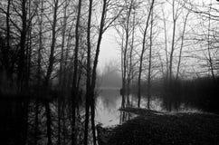 光秃的黑白树在有雾的早晨 免版税库存照片