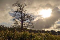 光秃,孤零零树在秋天阳光下 库存照片