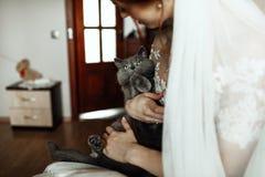 光芒四射的新娘微笑,当拿着在她的胳膊时的小的小猫 免版税图库摄影