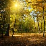 光芒在秋天公园晒黑 免版税库存图片