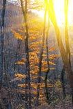 光芒星期日结构树 免版税库存图片