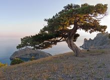 光芒星期日结构树 库存图片