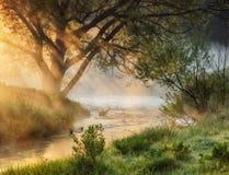 光芒 一个美丽如画的有雾的早晨 春天黎明 免版税库存照片
