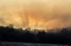 光通过在日出的树 免版税库存图片