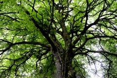 光通过树木天棚 免版税库存照片