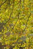 光通过树的叶子 库存照片