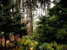 光通过森林来临 库存图片