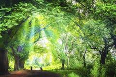光通过森林 免版税图库摄影