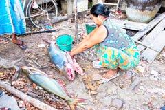 仰光,缅甸- 11月25 -妇女清洗在co的鱼 图库摄影