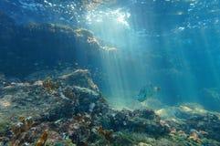 光水下在与鱼的一块礁石 免版税库存图片