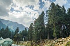 克什米尔,有松树、山和剧烈的多云天空的印度的一个典型的风景 库存照片