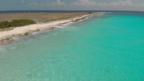克伦库拉索岛海岛 寄生虫射击 影视素材
