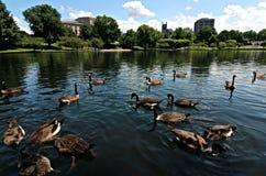 克利夫兰俄亥俄的大学圈子 免版税库存图片