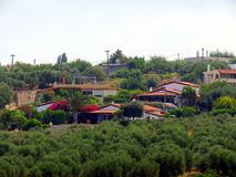 克利特壮观的橄榄色的庭院  库存图片