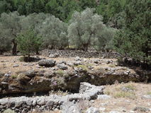 克利特峡谷希腊海岛samaria 免版税库存照片