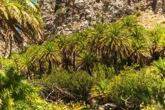 克利特,希腊:棕榈海湾的森林 免版税库存照片