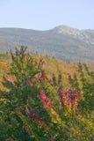 克劳福德山谷白色山的国家公园,新罕布什尔 免版税库存图片