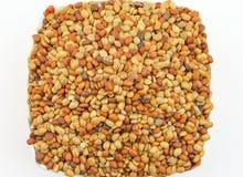 克拉种子 免版税库存照片