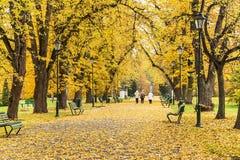 克拉科夫,波兰- 2015年10月25日:美丽的胡同在秋季公园 免版税库存图片