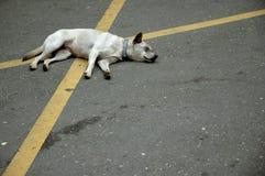 克服的狗 免版税库存照片