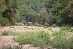 克留格尔国家公园,普马兰加省,南非 库存图片