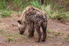 克留格尔国家公园,普马兰加省,南非 图库摄影