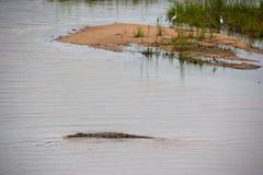 克留格尔国家公园,普马兰加省,南非 库存照片